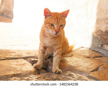 sitting tabby cat (Stray cat)