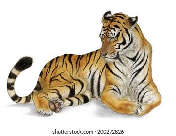 Sitting tiger (Panthera tigris) - white (no background)