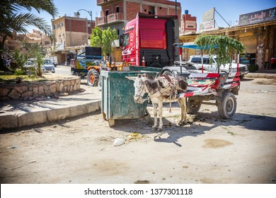 SIWA, EGYPT - April 2018: Donkey cart on the road at Siwa oasis, traditional transport in Egypt