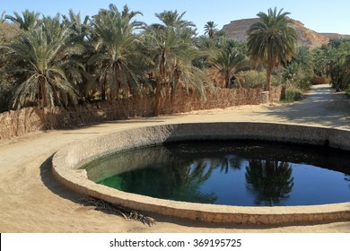 The Siwa Oasis in the Sahara in Egypt