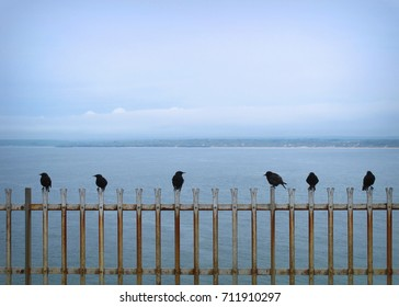 Six black crows on a fence by the sea