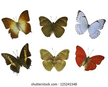 six butterfly white