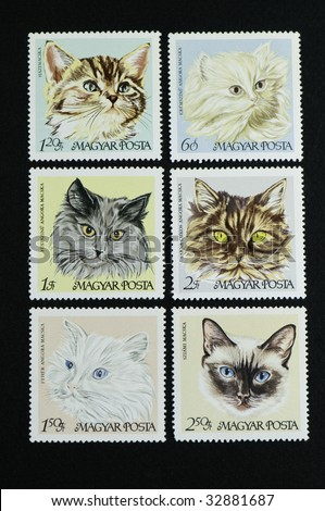 Six cats on postage stamp Hungarian cat series stamps on a black background.