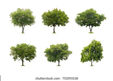 six collection of beautiful green tree isolated on white