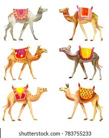 Six different camels with seat for a ride isolated over white background
