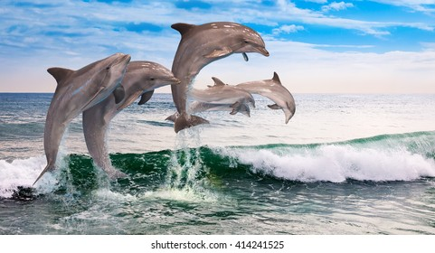 six dolphins jumping together in the ocean waves