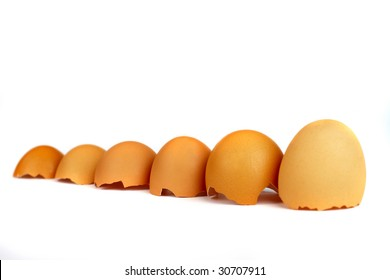 six eggs brown shells in size order