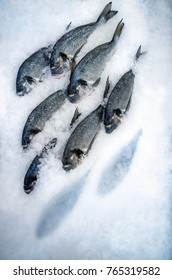 Six fishes dorado on ice surface Two fish is not there the imprint in the snow from fish