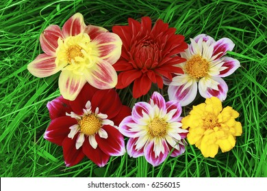 six flowers on Grass background