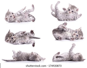 six gray tabby Scottish kittens lies on their back and played. animal isolated on white background