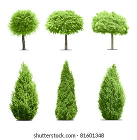 Six green trees isolated on white