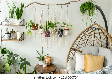 Six handmade cotton macrame plant hangers are hanging from a wood branch. The macrame have pots and plants inside them. There are decorations and shelves on the side with an egg chair and a table.