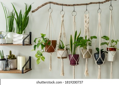 Six handmade cotton macrame plant hangers are hanging from a wood branch. The macrame have pots and plants inside them. There are decorations and shelves on the side.