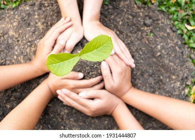 Six hands are planting young seedlings on fertile ground, taking care of growing plants. World environment day concept, protecting nature.