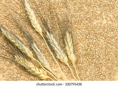 Six heads of bearded wheat on scattered wheat kernels on a wooden table top