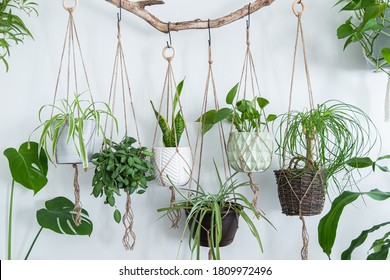 Six jute twine macrame plant hangers are hanging from a driftwood branch. Some of them have wooden rings used as decor to add character to the crafts. A nice variety of plants and pots are used. - Shutterstock ID 1809972496