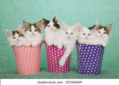 Six Norwegian Forest Cat kittens sitting inside polka dot buckets pails containers on mint green background
