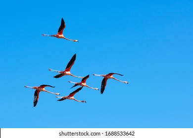 Six pink flamingos flying over a blue sky. Animal concept
