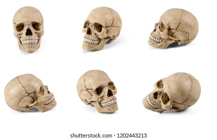 Six plastic human skulls at various angles isolated on white background