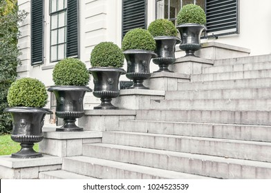 six round shrubs lined up in a row next to a concrete stair