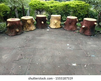 six tree stumps as sitting stools in garden or park