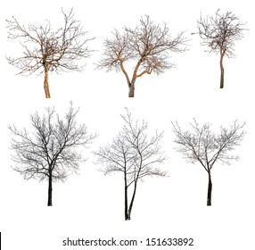 six trees without leaves isolated on white background