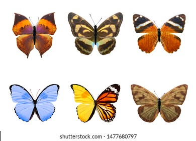 six tropical butterflies. isolated on white background. INSECTS FOR DESIGN
