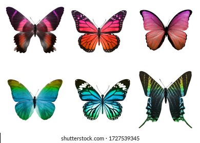 six tropical butterflies. isolated on white background