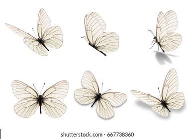 sechs weißer Schmetterling einzeln auf weißem Hintergrund