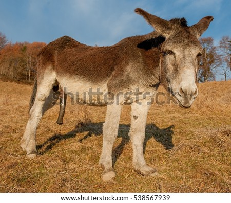 Donkey penis in a mans ass