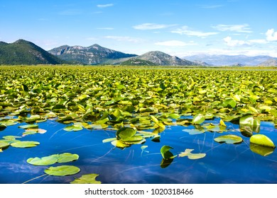 Skadar Lake National Park, Montenegro