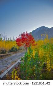 Skardu Autumn colours