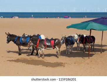 SKEGNESS. LINCOLNSHIRE. ENGLAND, AUGUST 1, 2018. Donkeys used for Donkey rides leaving the beach at the end of the day. August 1, 2018, Skegness, Lincolnshire, England, UK.