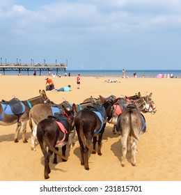 SKEGNESS, LINCOLNSHIRE, ENGLAND - JULY 2014: Donkeys rest awaiting their next ride to children at Skegness, England. 30TH July 2014.