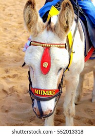 Skegness, Lincolnshire, UK. August 17, 2011.  A close-up of  a lovely beach Donkey named Mumble on the sands at Skegness in Lincolnshire.