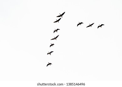 skein of geese - geese during the autumn flight to places where they spend the winter. South Poland