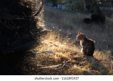 A skein of net for the collection of olives in the background of the cat in the evening sun. Corfu, Greece