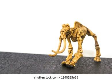 Skeletal dinosaur with white backgroud
