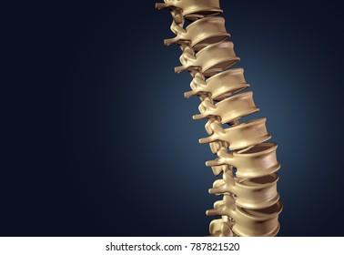 Skeletal human spine and vertebral column or intervertebral discs on a dark background as a medical concept as a 3D illustration.