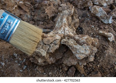 Skeleton and archaeological tools. dig dinosaur real fossil