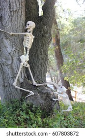 Skeleton being chased up a tree by a skeleton dog.
