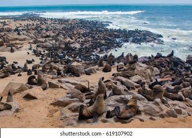 skeleton coast fur seal colony at Cape Cross Namibia