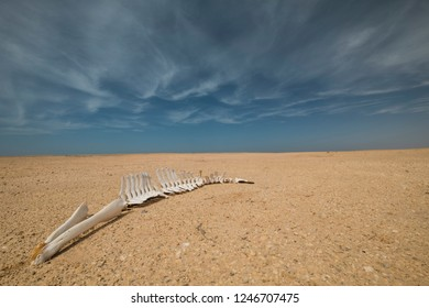 Skeleton of death dolphin at desert landscape