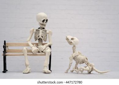 Skeleton and dog companion