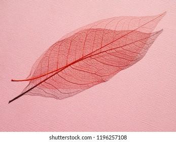 Skeleton of dry red leaf. Autumn background.