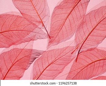 Skeleton of dry red leaves. Autumn background.