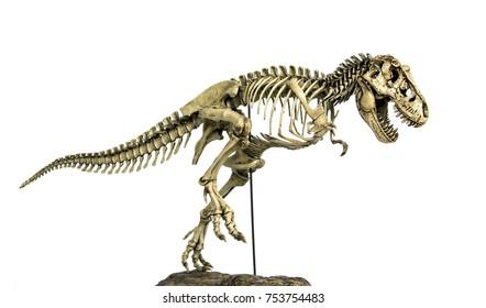 Skeleton Famous Dinosaurs of Cretaceous Tyrannosaurus Rex ( t-rex ) isolated on white background.