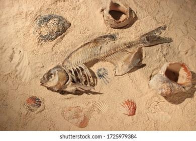 Skeleton of fish on the seashore.