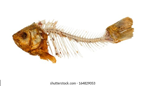 Skeleton of fish - symbol for food shortage and misery. Isolated on white background.