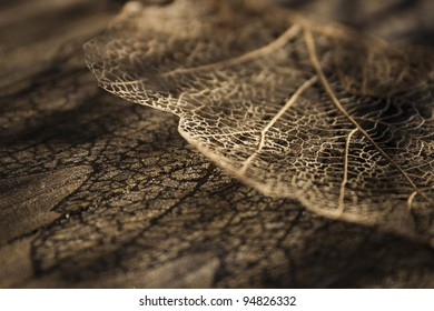 Skeleton leaf with detailed veins casting shadow